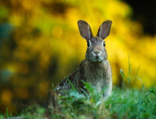 Nie o to chodzi, by złapać króliczka – masz wszystko, czego potrzebujesz do szczęścia